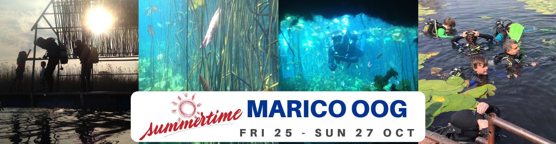 Marico oog OCT 2019